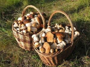 Белые грибы Кинбурнская коса